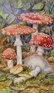 Anton Funke | Mushrooms