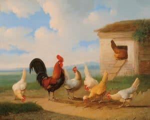 Albert Verhoesen | Haan met kippen bij een ren