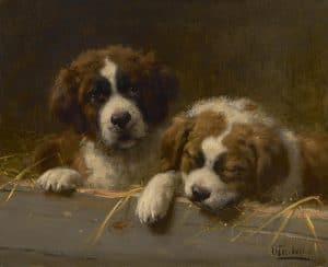 Otto Eerelman | St Bernard puppies