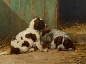 Otto Eerelman | Two St Bernard puppies