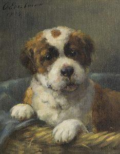 Otto Eerelman | Sint Bernard pup