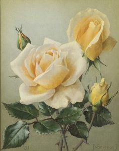 Jan Voerman jr. | Gele rozen